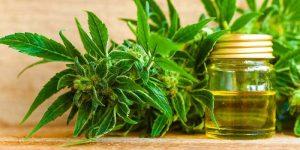 10 Best CBD Oils for Pain Relief (2018)