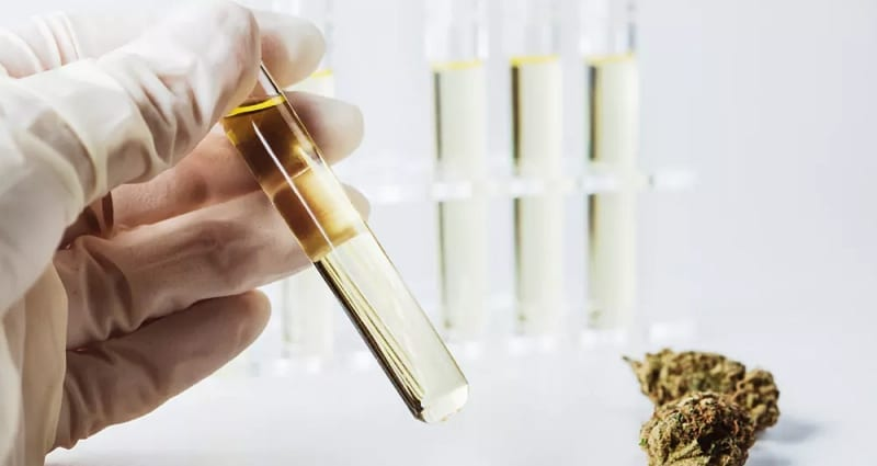 CBD Studies in the Lab