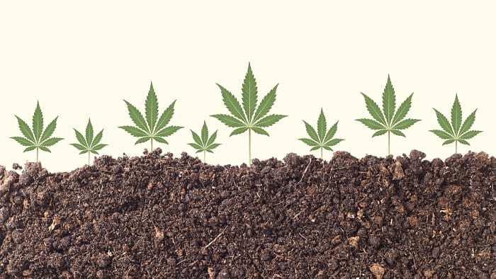 hemp-soil-clean-up