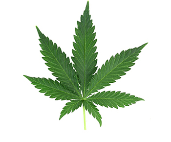 cbd hemp marijuana oil